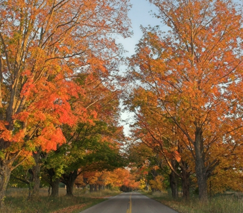 Orange colored fall leaves on trees bordering road in Banks Township, Michigan